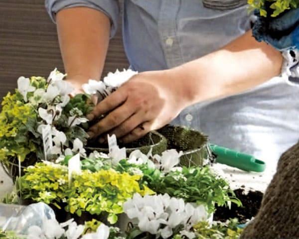 植物の専門家から学べるワークショップ開催中!